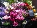 お花屋さん薔薇