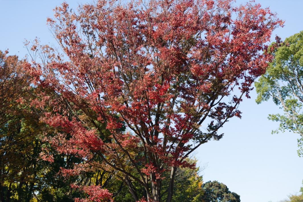 f:id:sekaibunka:20121118102757j:image