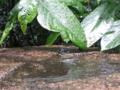 梅雨と心の描写