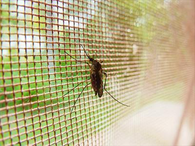 マラリア対策の蚊取り器が開発!殺虫剤を使わずに人のにおいで蚊を退治?