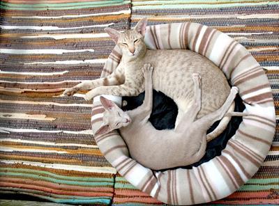 塩枕が健康に良い理由!塩の効果で頭の熱を取り快眠に導いてくれる方法