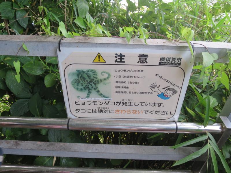 f:id:sekisida:20150808150204j:image