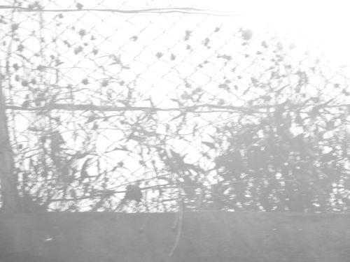 f:id:selino:20120624121557j:image