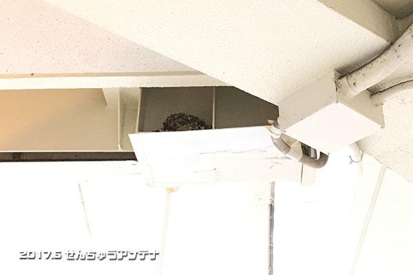 f:id:senchu-min:20170625235100j:plain