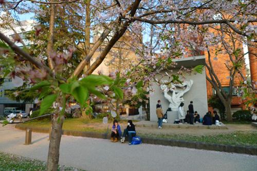 4月13日の錦町公園の桜