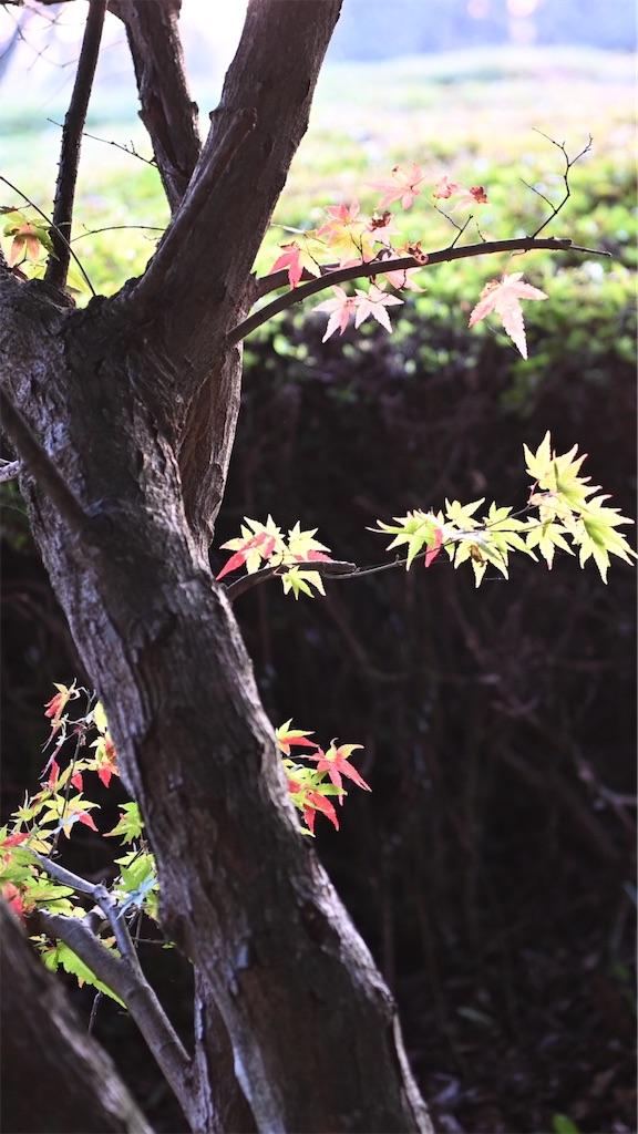 f:id:senjingaran5:20201119120108j:image