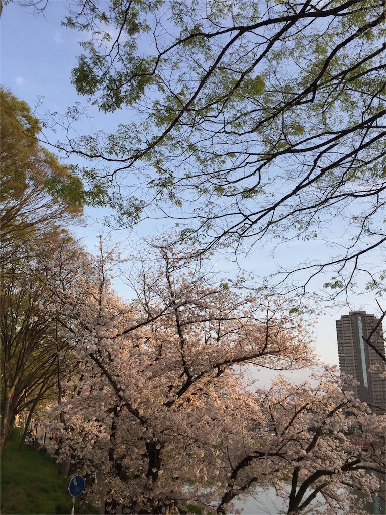 f:id:senkyo_bird:20170414010249j:image
