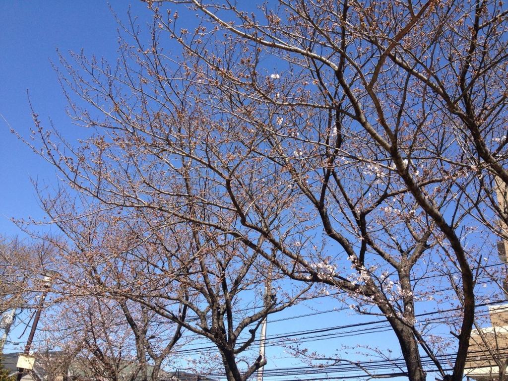 f:id:senn-shi:20170301120503j:plain