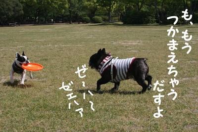 f:id:senna-udon:20070514145335j:image