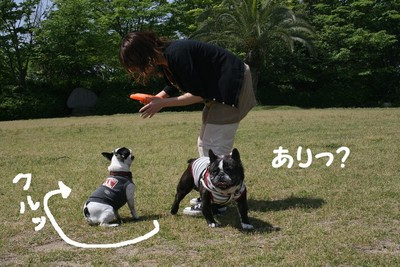 f:id:senna-udon:20070514145608j:image