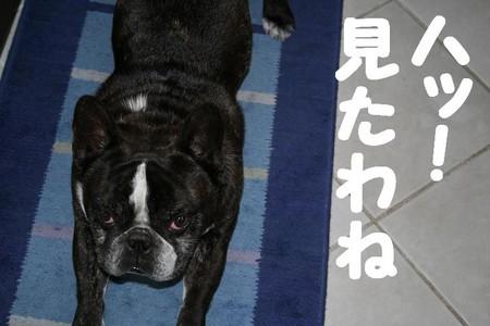 f:id:senna-udon:20070604205754j:image