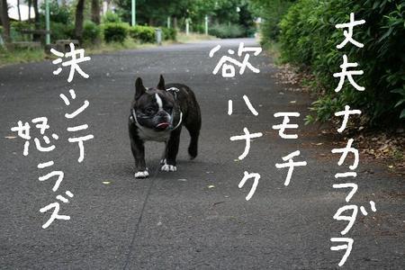 f:id:senna-udon:20070614133625j:image