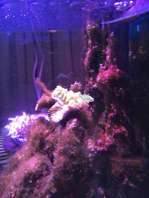 溶けかけたカンムリハナサンゴ