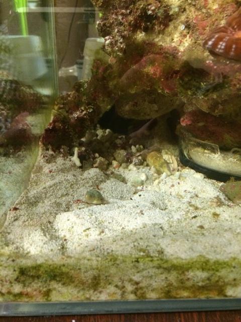 シアノバクテリア除去直後の水槽の底砂