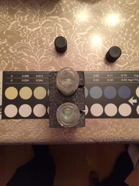 リン酸濃度試薬で飼育水のリン酸濃度を測定した