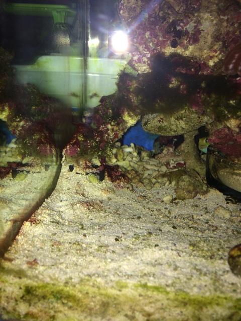 シアノバクテリアを除去した2日後の底砂