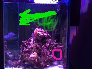 小型水槽でナガレハナサンゴを飼育するための乱流について