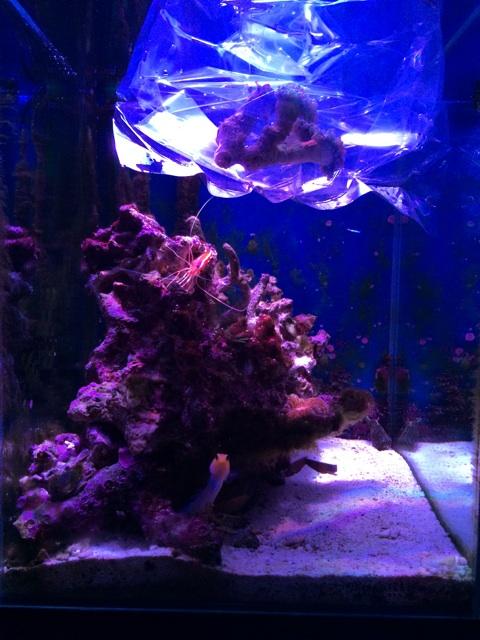 サンゴを水槽に導入する前に温度合わせを行う