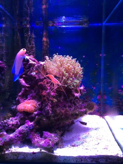 小型のサンゴ水槽のレイアウト変更前