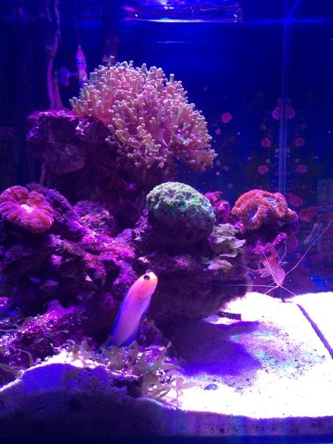 サンゴをレイアウトした小型水槽の全景