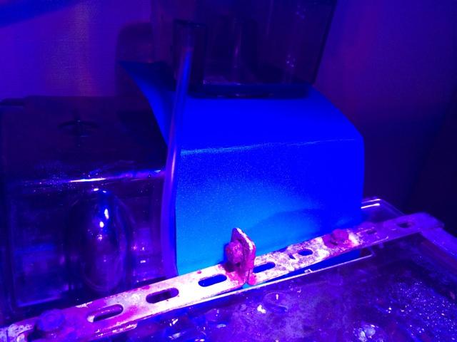 小型水槽でのコケ防止のコツ