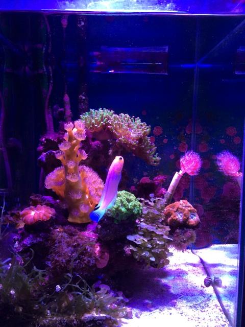 海藻が繁茂した小型の海水水槽