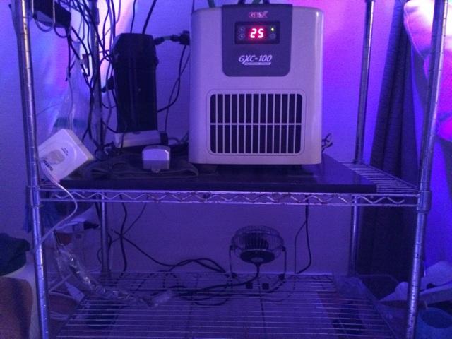 小型のサンゴ水槽に設置しているコンプレッサー式の水槽用クーラーGXC100