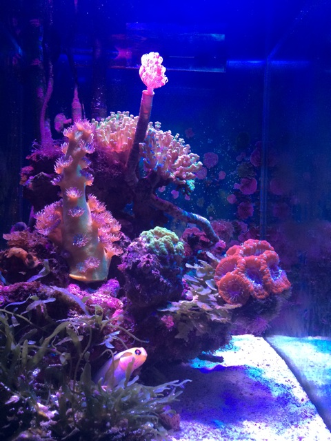 小型のサンゴ水槽の全景