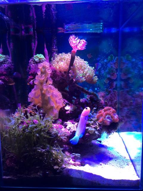 小型サンゴ水槽を正面から撮影した。