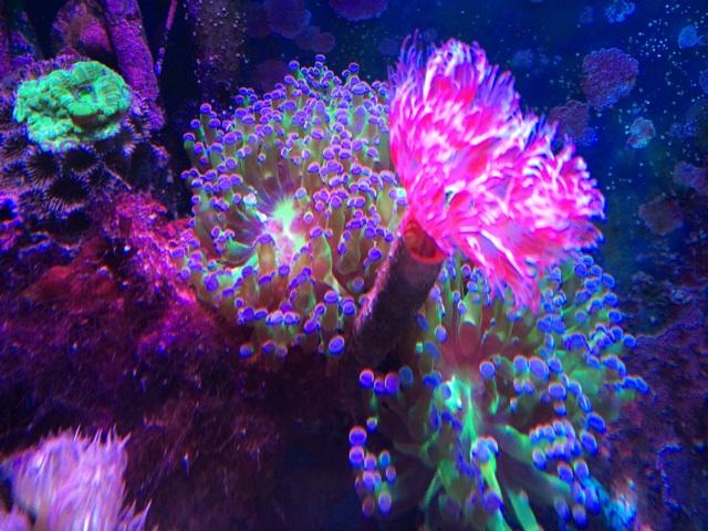 サンゴ水槽を上からクローズアップで撮影した