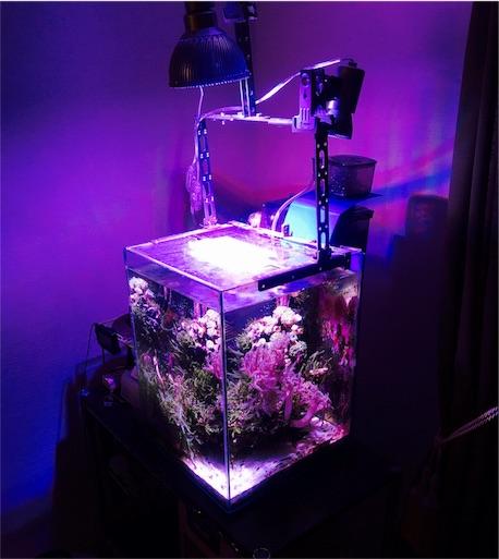 照明に浮かび上がる海水小型水槽