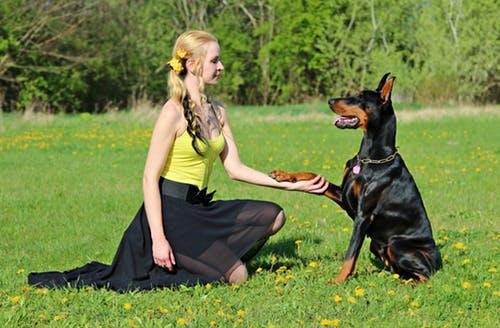 犬とパートナー