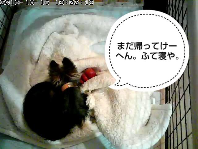 f:id:senoawa:20191017074130j:image