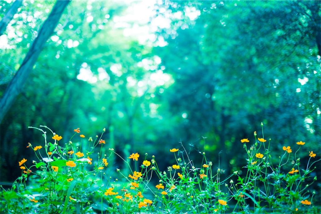 f:id:sense_of_flora:20171021091244j:image