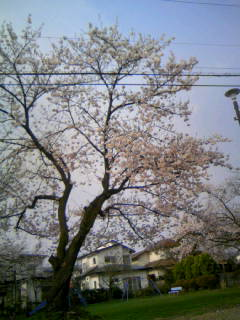 f:id:senseki:20150416153742j:image