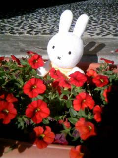f:id:senseki:20150729073045j:image