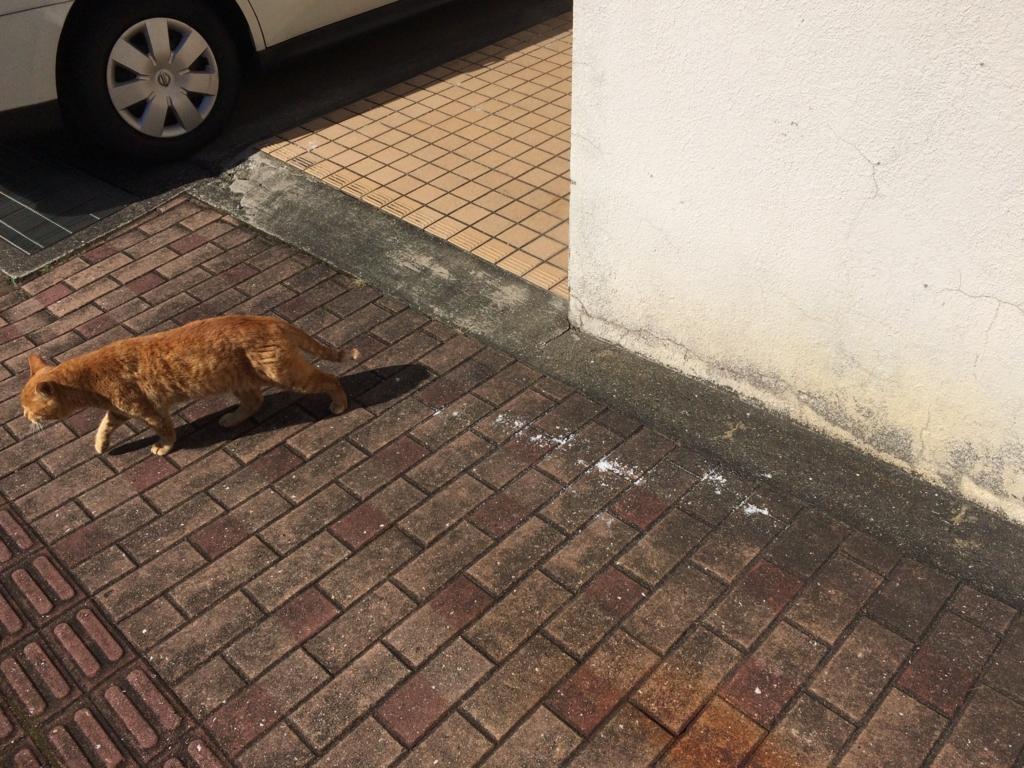ウォッシュベアー京町店周辺猫ちゃん