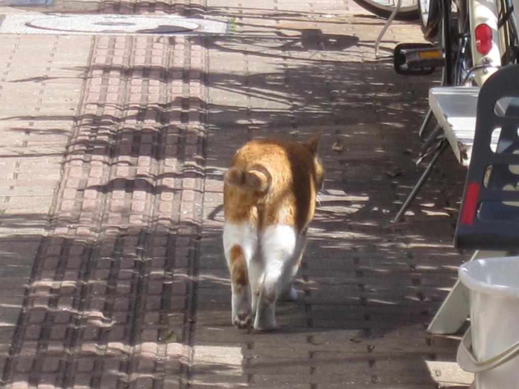 猫あるある「ついてこないで」