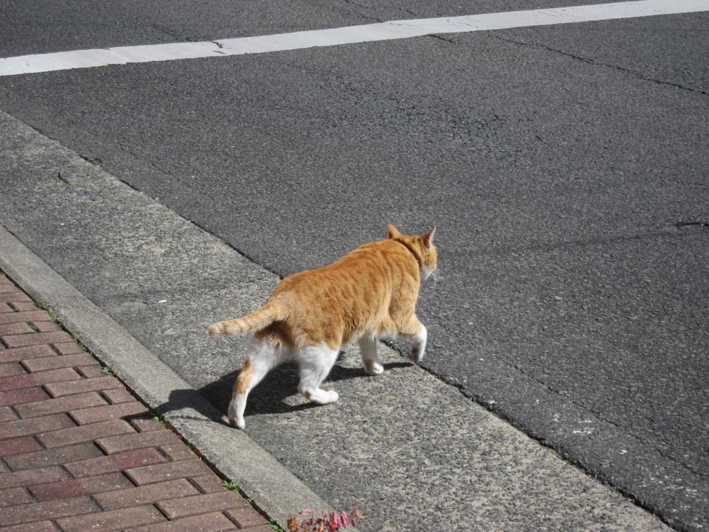 猫あるある「あたしゃ、どこまでも行くよ」