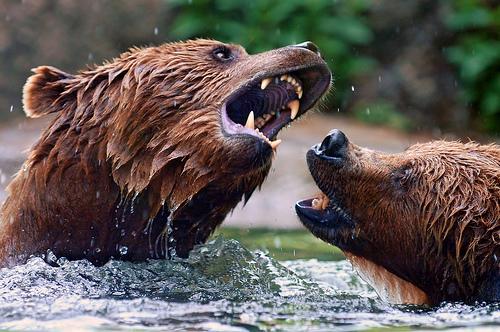 水遊びをする熊たち。火遊びはダメよ。
