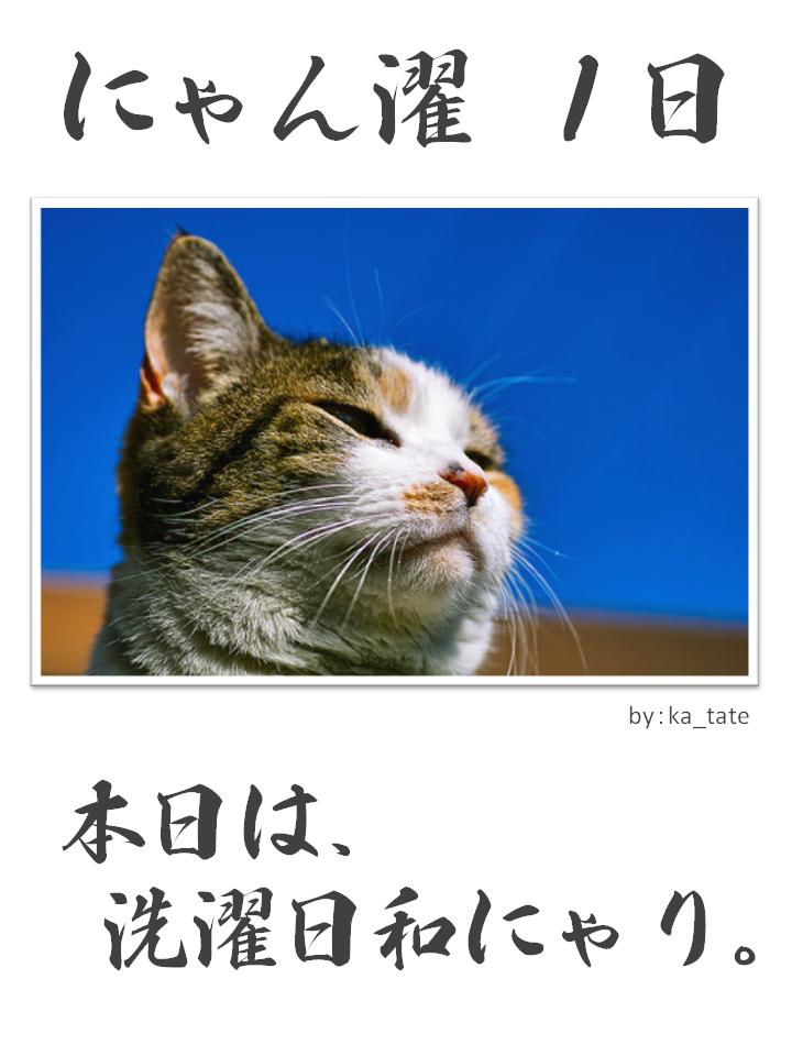 にゃん濯(にゃんたく)1日