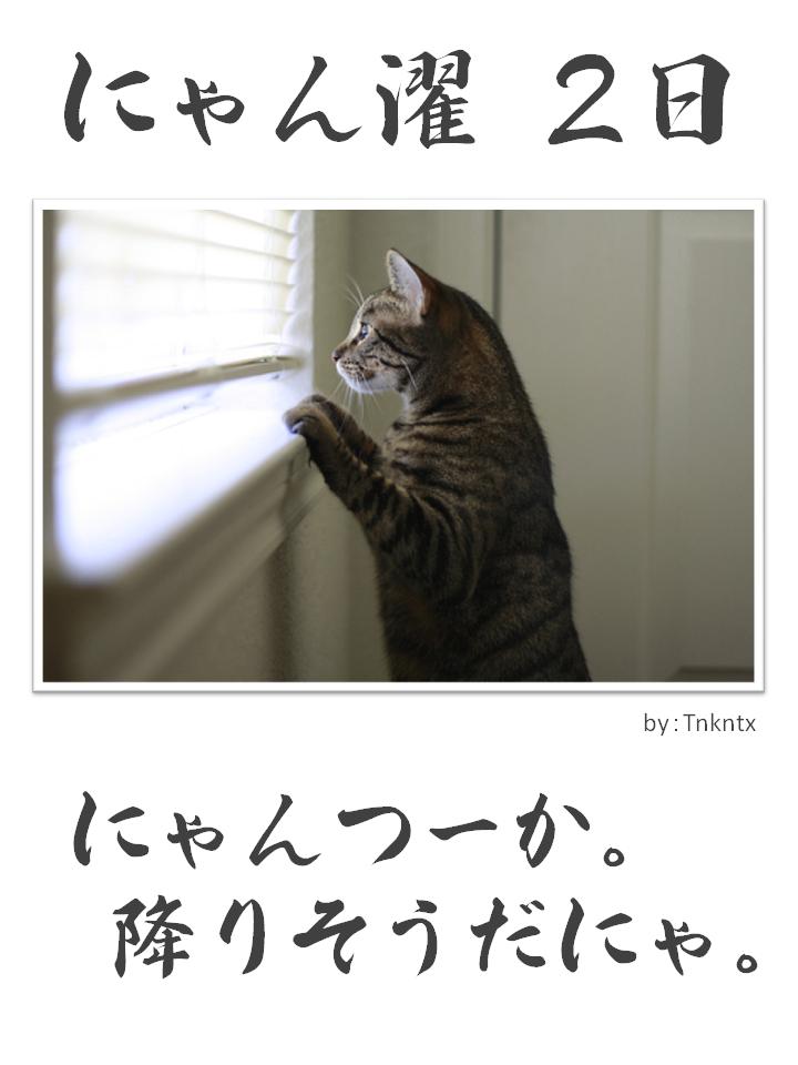 にゃん濯(にゃんたく)2日