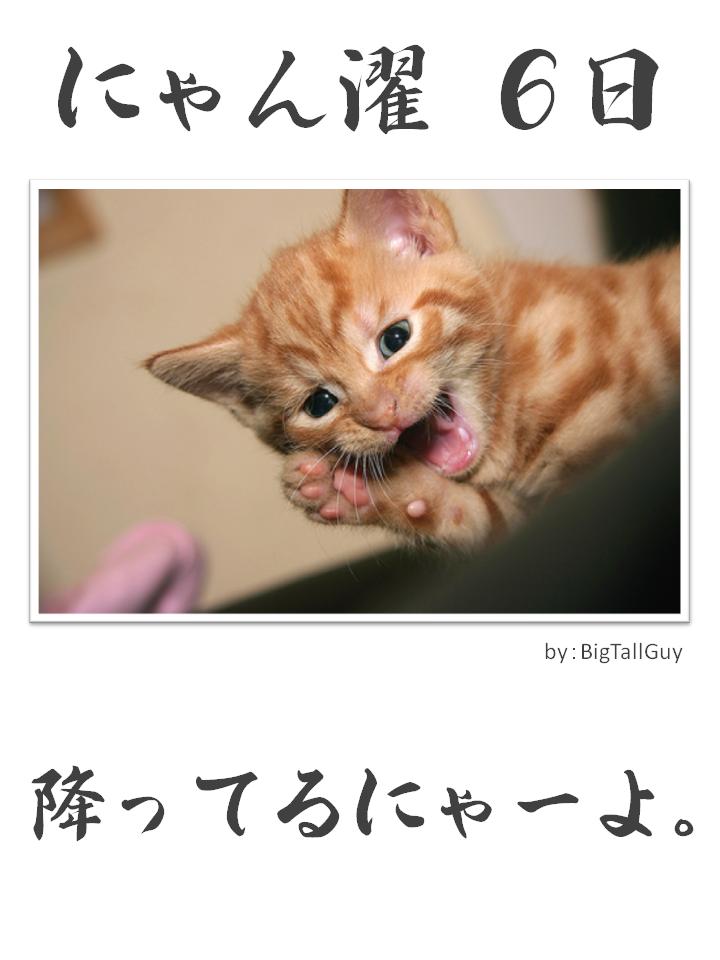 にゃん濯(にゃんたく)6日