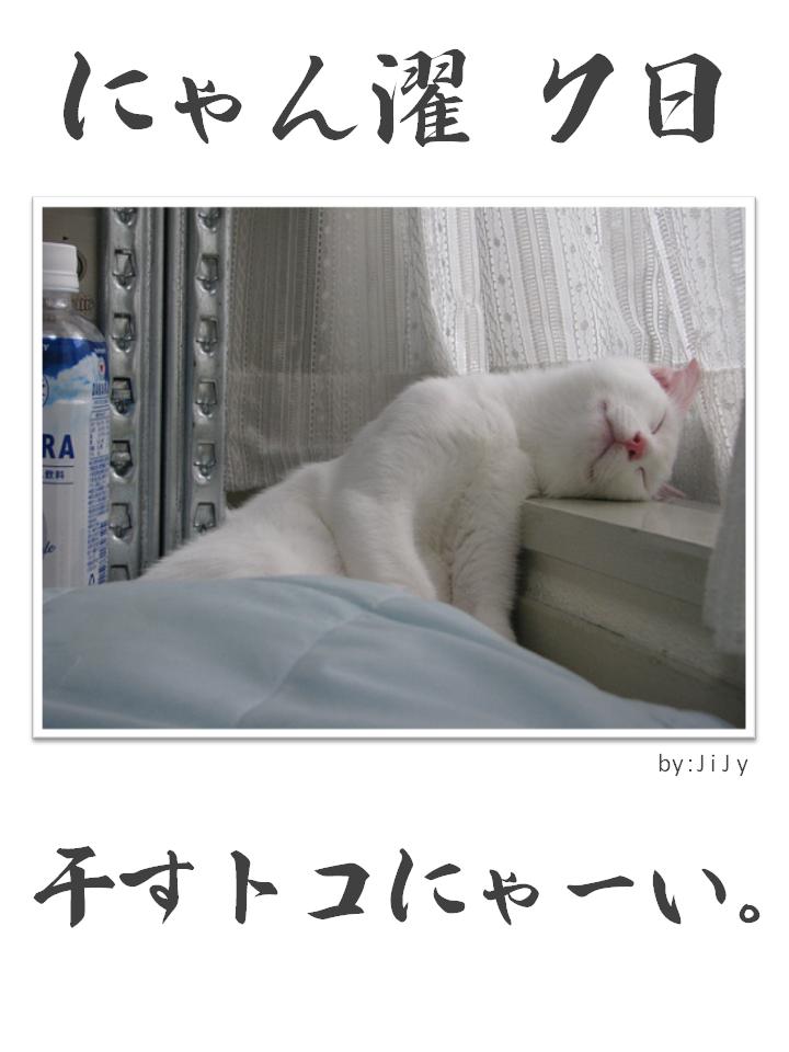 にゃん濯(にゃんたく)7日