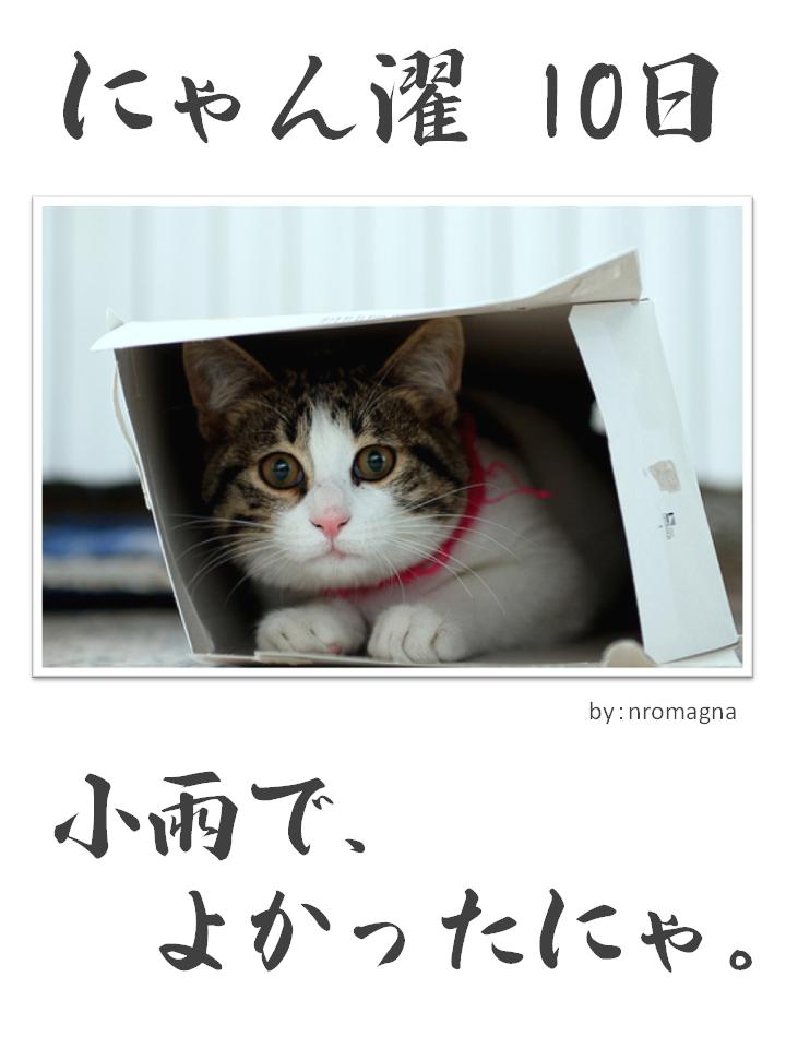 にゃん濯(にゃんたく)10日