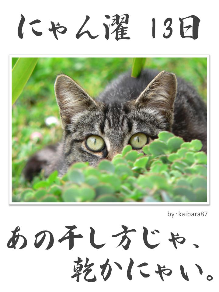 にゃん濯(にゃんたく)13日