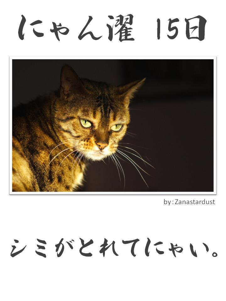 にゃん濯(にゃんたく)15日