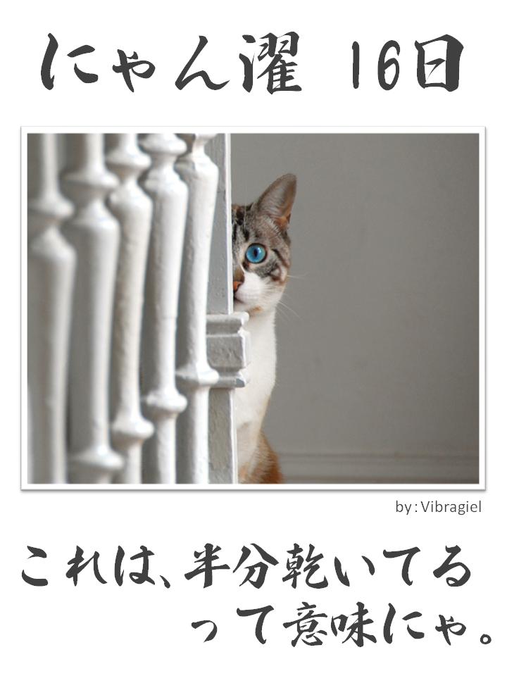 にゃん濯(にゃんたく)16日