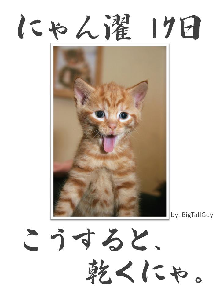 にゃん濯(にゃんたく)17日