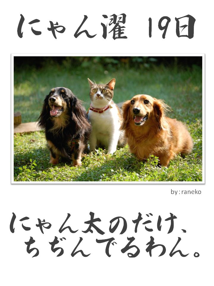 にゃん濯(にゃんたく)19日